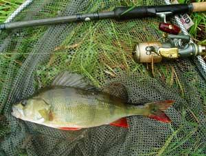 1lb Perch fish
