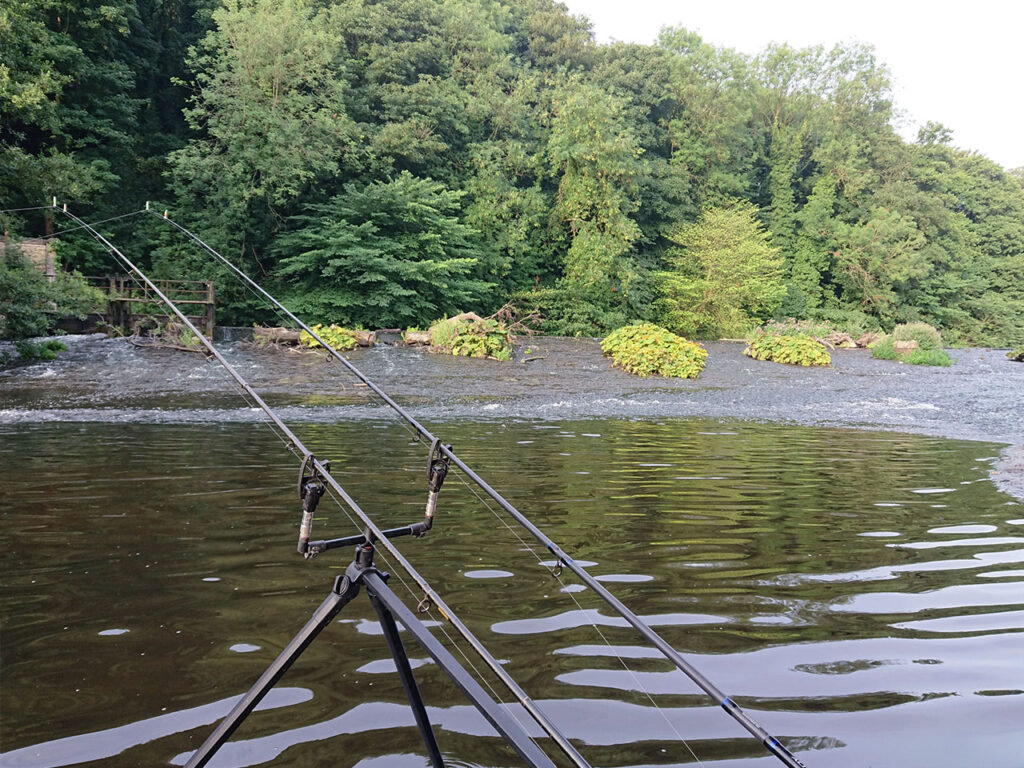 Freshwater carp - photo#48